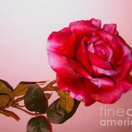 Elena Ivanova - Large Red Rose