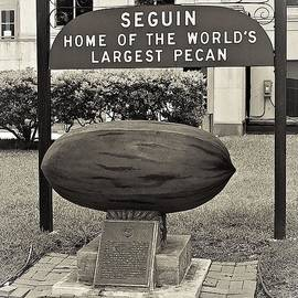 Gary Richards - Largest Pecan