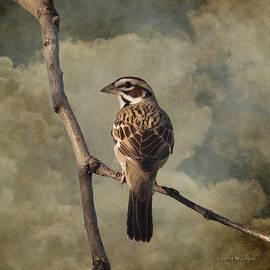 Karen Slagle - Lark Sparrow