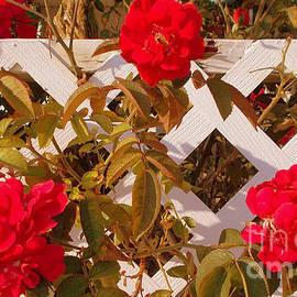 Last Roses of Galilee