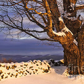 Alan L Graham - Late Day Winter Light