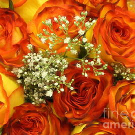 Photographic Art and Design by Dora Sofia Caputo - Late Summer Roses