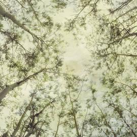 Late Summer Tree Tops - Priska Wettstein