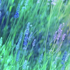 Marti Gamba - Lavender 2