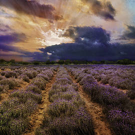 Lynn Bauer - Lavender Dawn
