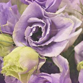 Kathy Bucari - Lavender Dreams
