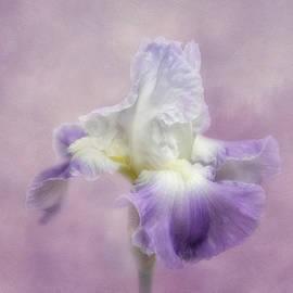 Kim Hojnacki - Lavender in the Garden