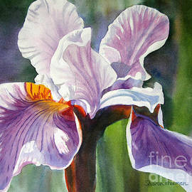 Lavender Iris with Colorful Background - Sharon Freeman