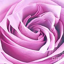Regina Geoghan - Lavender Lovely Rose