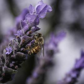 Nancy Forehand - Lavender Nectar