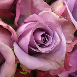 Rosita Larsson - Lavender Roses
