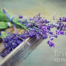 Eva Lechner - Lavender Summer