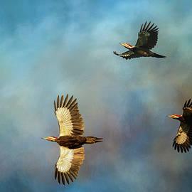 Jai Johnson - Lead With Light Pileated Woodpecker Art by Jai Johnson