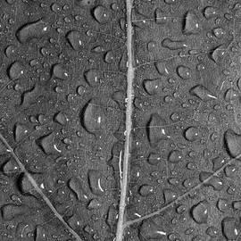 Steve Gadomski - Leaf Dew Drop Number 12 BW