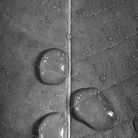 Steve Gadomski - Leaf Dew Drop Number 9 BW