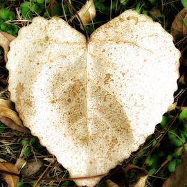Deon Grandon - Leaf Heart