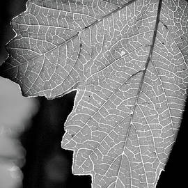 James Granberry - Leaf Light Black and White