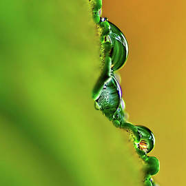 Kaye Menner - Leaf Profile and Water Droplets