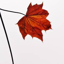 Richard Brookes - Leaf