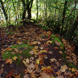 Adria Trail - Leafy Clearing