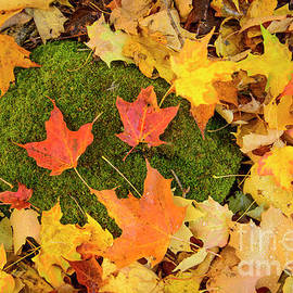 Alana Ranney - Leaves and Moss Covered Rock