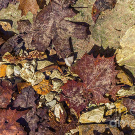 Ashley M Conger  - Leaves And Rocks 1
