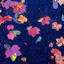 Christopher Woods - Leaves