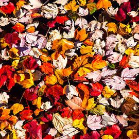 Karol Livote - Leaves Galore