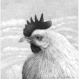 Leghorn Hen in Profile