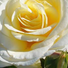 Helene Fallstrom - Lemon and meringue rose