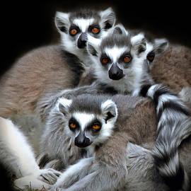 Marion Johnson - Lemurs