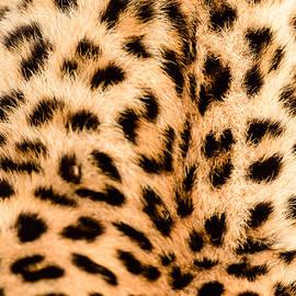 Andrew Chislett - Leopard fur close up
