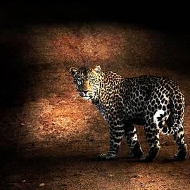 Jean Francois Gil - Leopard