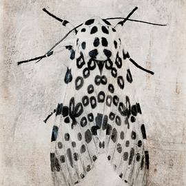 Melissa Bittinger - Leopard Moth Minimalist Nature