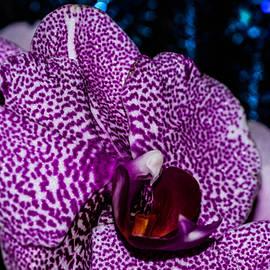 Gerald Kloss - Leopard pink orchid