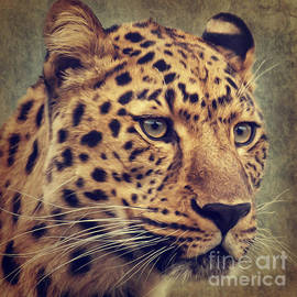Angela Doelling AD DESIGN Photo and PhotoArt - Leopard Portrait