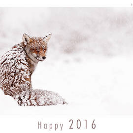 Roeselien Raimond - Let It Snow 1 - New Years Card Red Fox in the Snow