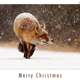 Roeselien Raimond - Let It Snow 2 - Christmas Card Red Fox in the Snow