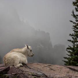 Life on the edge // Glacier National Park  - Nicholas Parker