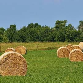 Bruce Bley - Life on the Farm