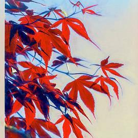 Jean OKeeffe Macro Abundance Art - Light And Leaves