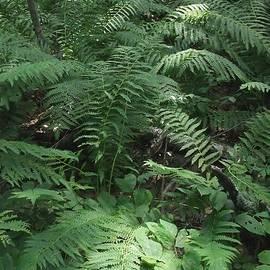 Melissa McCrann - Light Finds The Forest Floor