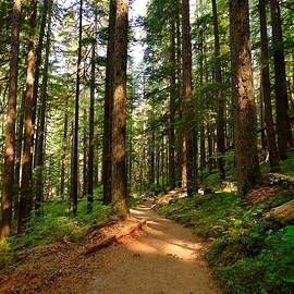 Lynn Hopwood - Light in the forest