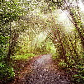Debra and Dave Vanderlaan - Light on the Forest Trail