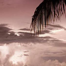 Lightning Under the Palms - Jon Neidert