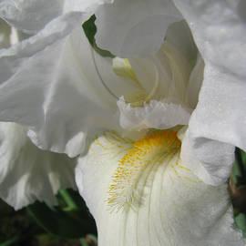 Brooks Garten Hauschild - Like Angel Wings