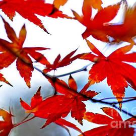 Kaye Menner - Like Autumn Butterflies in the Breeze