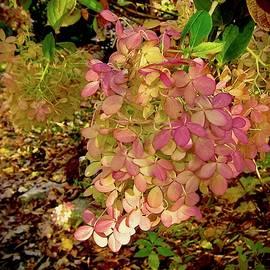 Elizabeth Tillar - Like Pebbles Glistening on the Path to Beauty