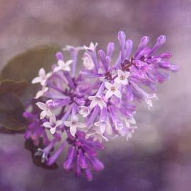 Tom Mc Nemar - Lilac Blossom