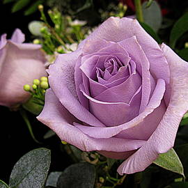 Bonita Brandt - Lilac Roses